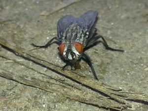 fly_08